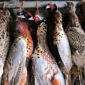 2011_Mersham_shoot_game_birds_3.2e16d0ba.fill-360x360